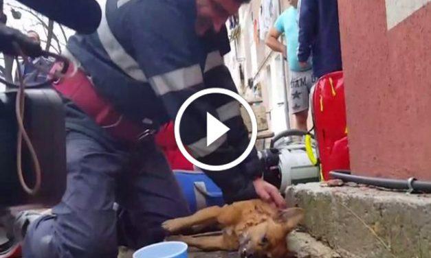 Ungewöhnliche Wiederbelebung: Feuerwehrmann rettet Hund mit Mund-zu-Schnauze-Beatmung