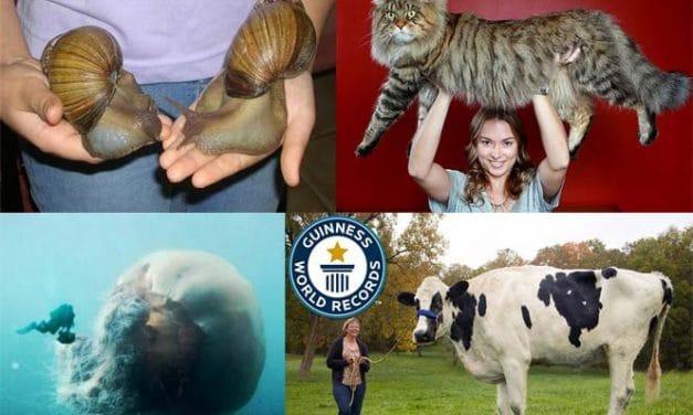 Die 7 größten Tiere ihrer eigenen Art #5 hat mich total schockiert!